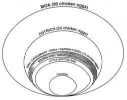 egg size chart