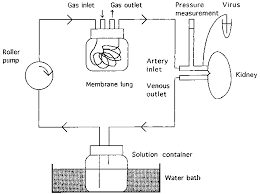 perfusion system