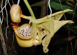 amazon plants and animals