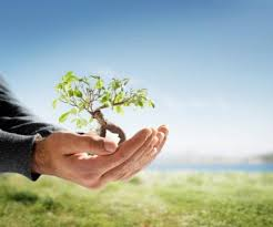 planting new tree