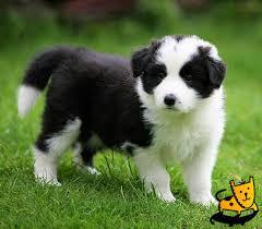 cute pet dogs