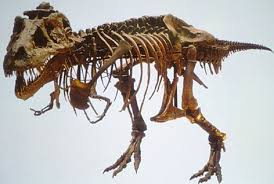 dinosaur fossil images