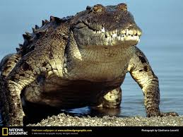 american crocs