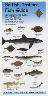 fish in the uk