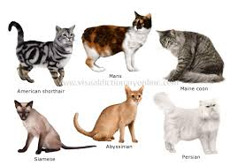 domestic cat pictures