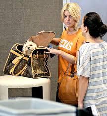 dog handbag carrier