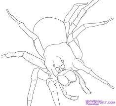 draw a spider