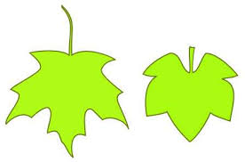 grape leaf drawing
