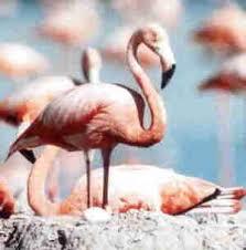 bahamas birds
