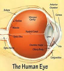 functions of the eye