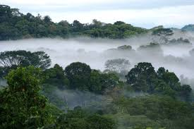 rainfall in the amazon rainforest