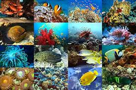 animals in coral reefs
