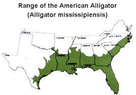 american alligators habitat