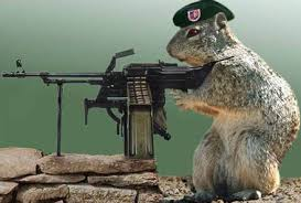 7-21-07-army_squirrel.jpg