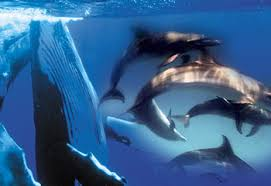 dolphin and whales