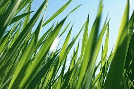 grass photos