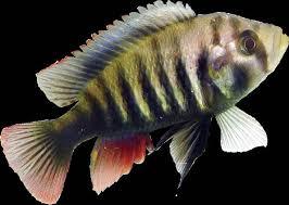 especies de peixe