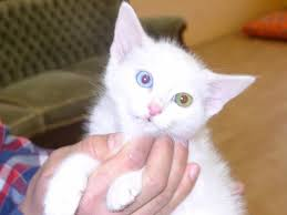 kedi video