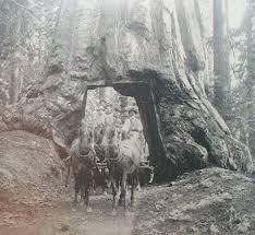 montgomery woods