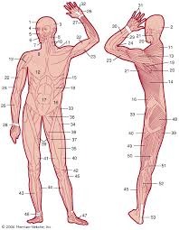 10 major muscles