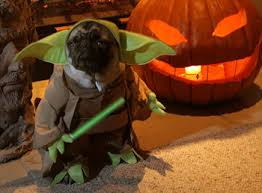pugs in halloween costumes