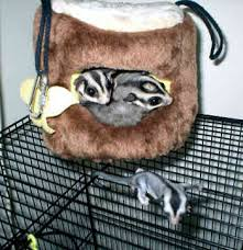 flying squirrels pets