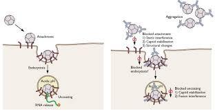 neutralization antibody