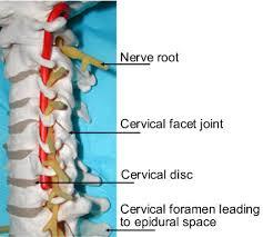 bones in neck