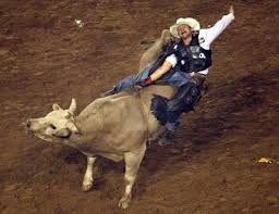 bull riding images