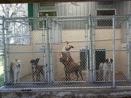 kennel for dogs