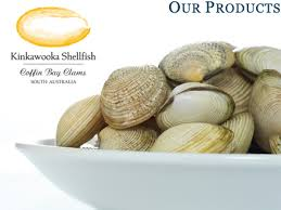 clam shellfish