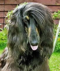 all large dog breeds