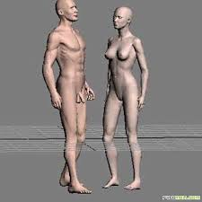 3d models anatomy