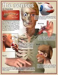 5 senses of the body