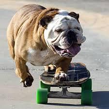 dog on skate board