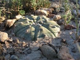 cactus name