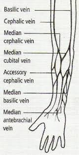 antecubital vein