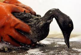 cleaning up oil spill