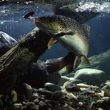 fishing underwater