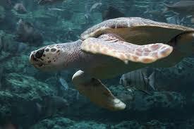 Biodiversité : adieu bayous de Louisiane 1314561855_a3697412e8