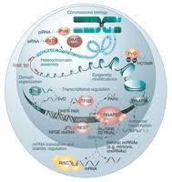 histone methyltransferases