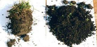 suelo humifero