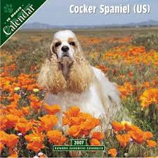 cocker spaniel calendars