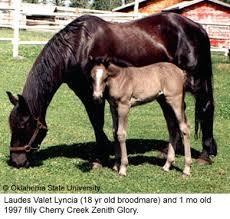 horses in canada