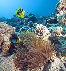 red sea diving pictures