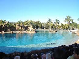 gold coast seaworld