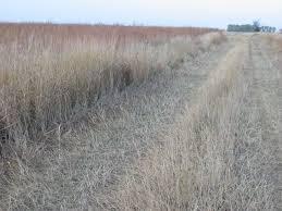 grass habitat