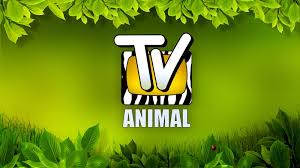 http://t0.gstatic.com/images?q=tbn:jwKUSX5TE_l34M:http://audienciadatv.com/wp-content/uploads/2009/10/tv-animal.jpg