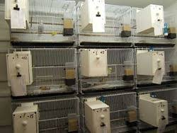 budgerigar cages