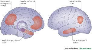 brain core